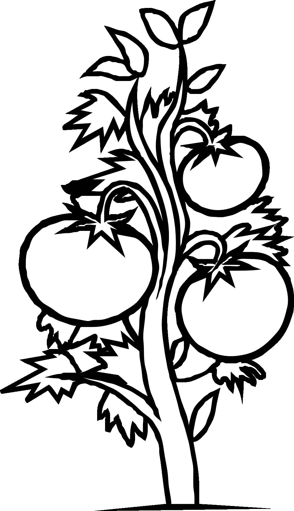 Tomato Clipart Black And White.