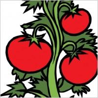 Happy Tomato Plants Clipart.