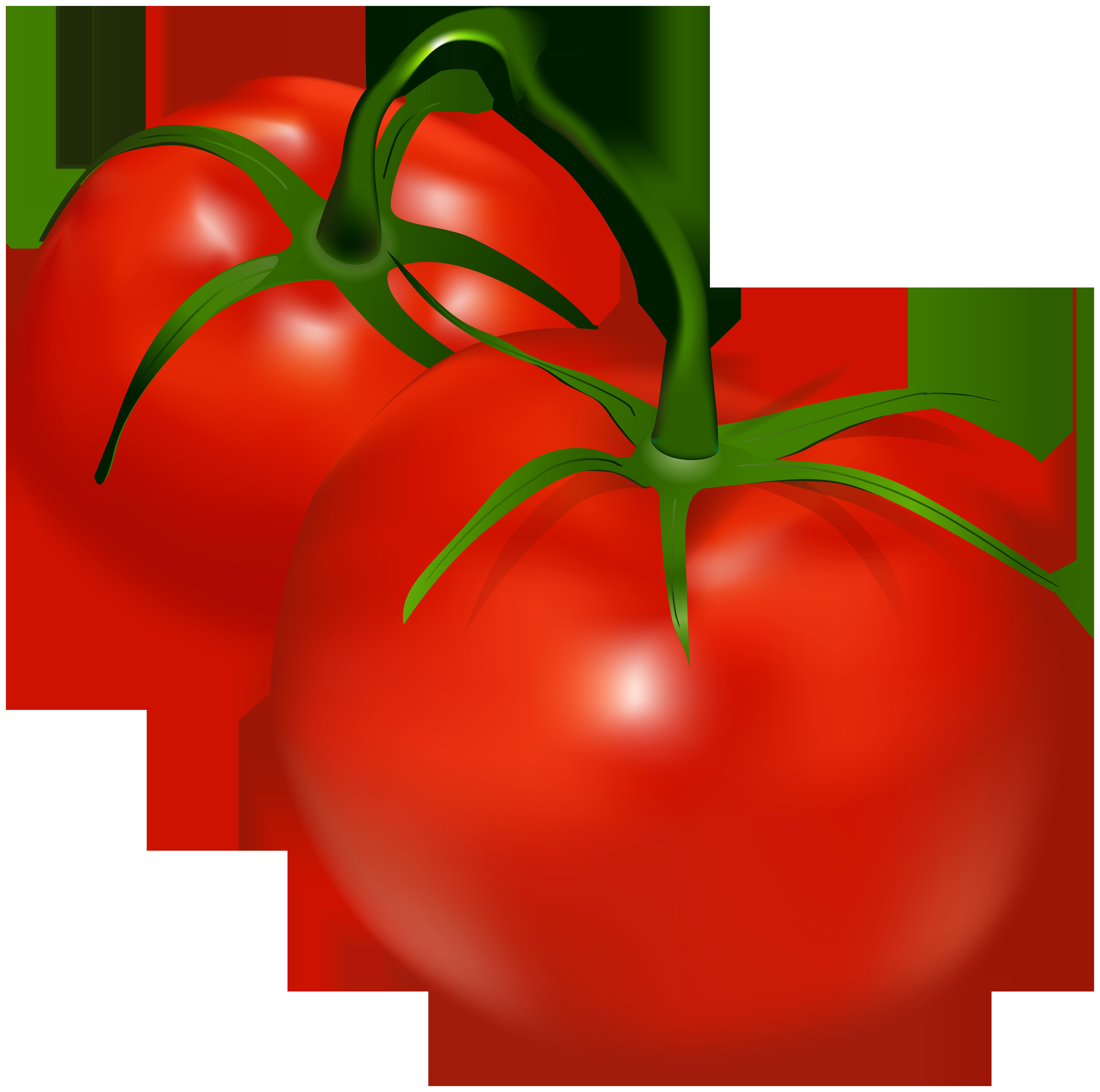 Tomatoes Transparent PNG Clip Art.