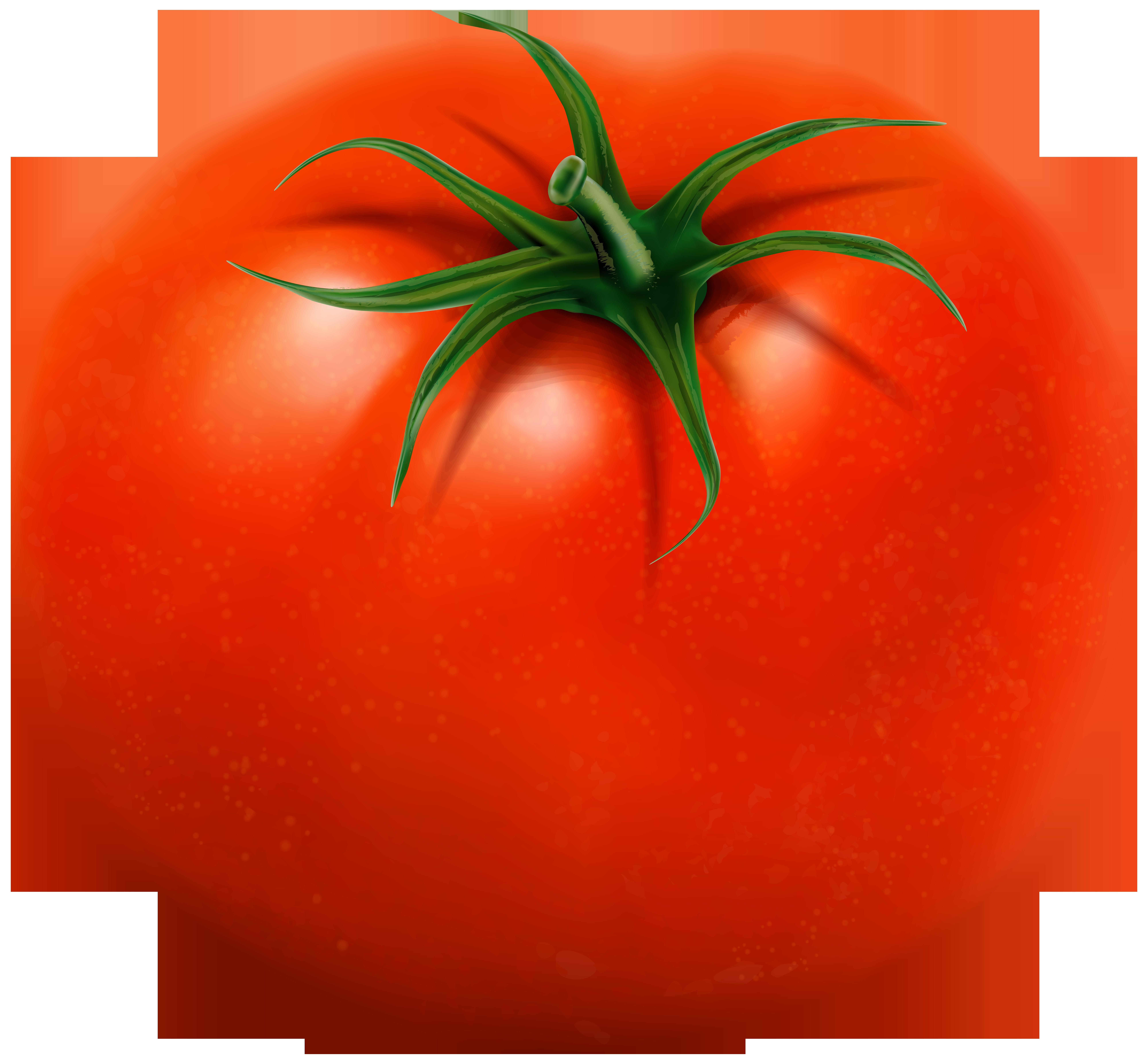 Tomato Transparent Clip Art Image.