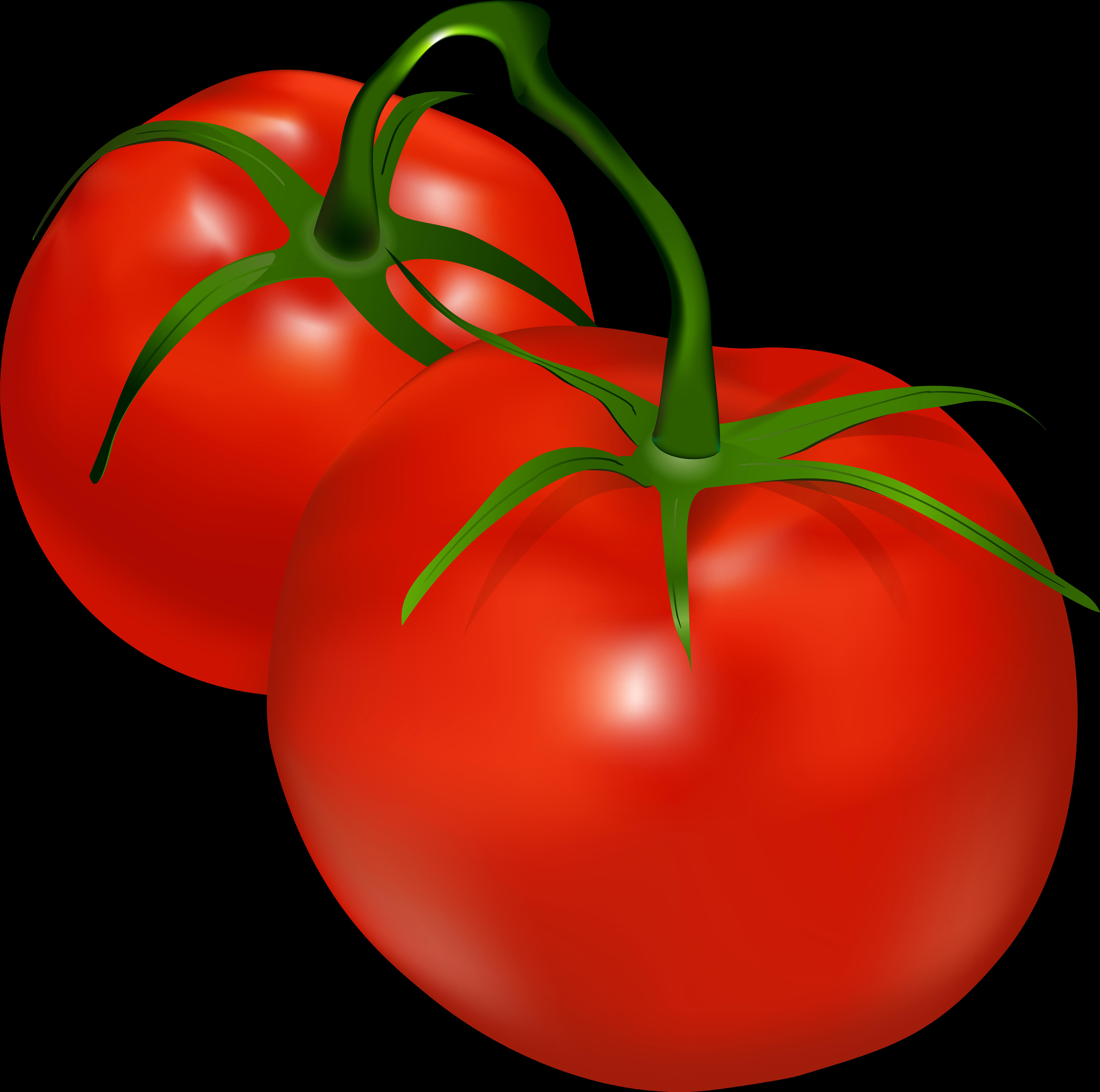 Tomatoes clipart vine clip art, Tomatoes vine clip art.