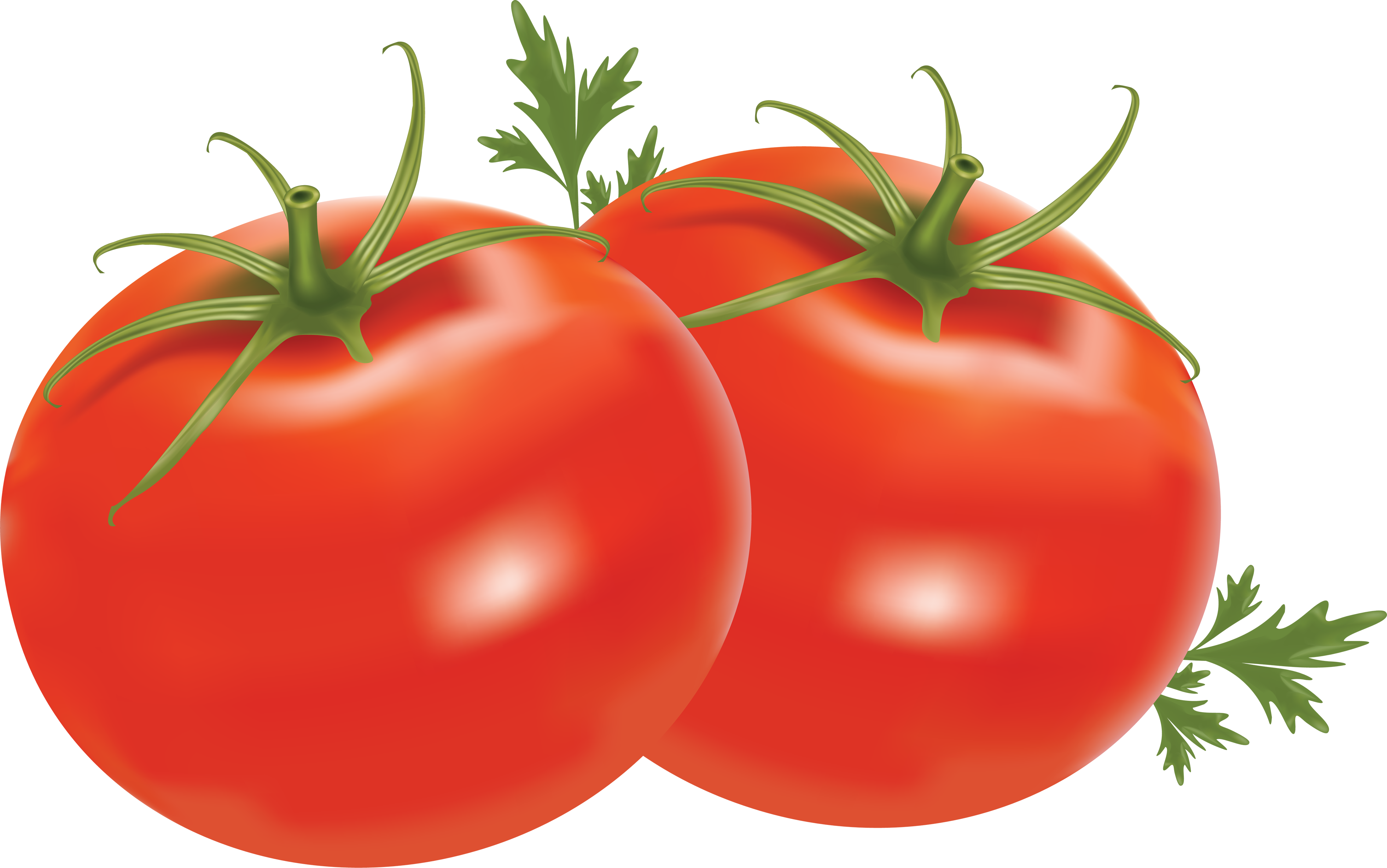 Red Tomatoes PNG Image.