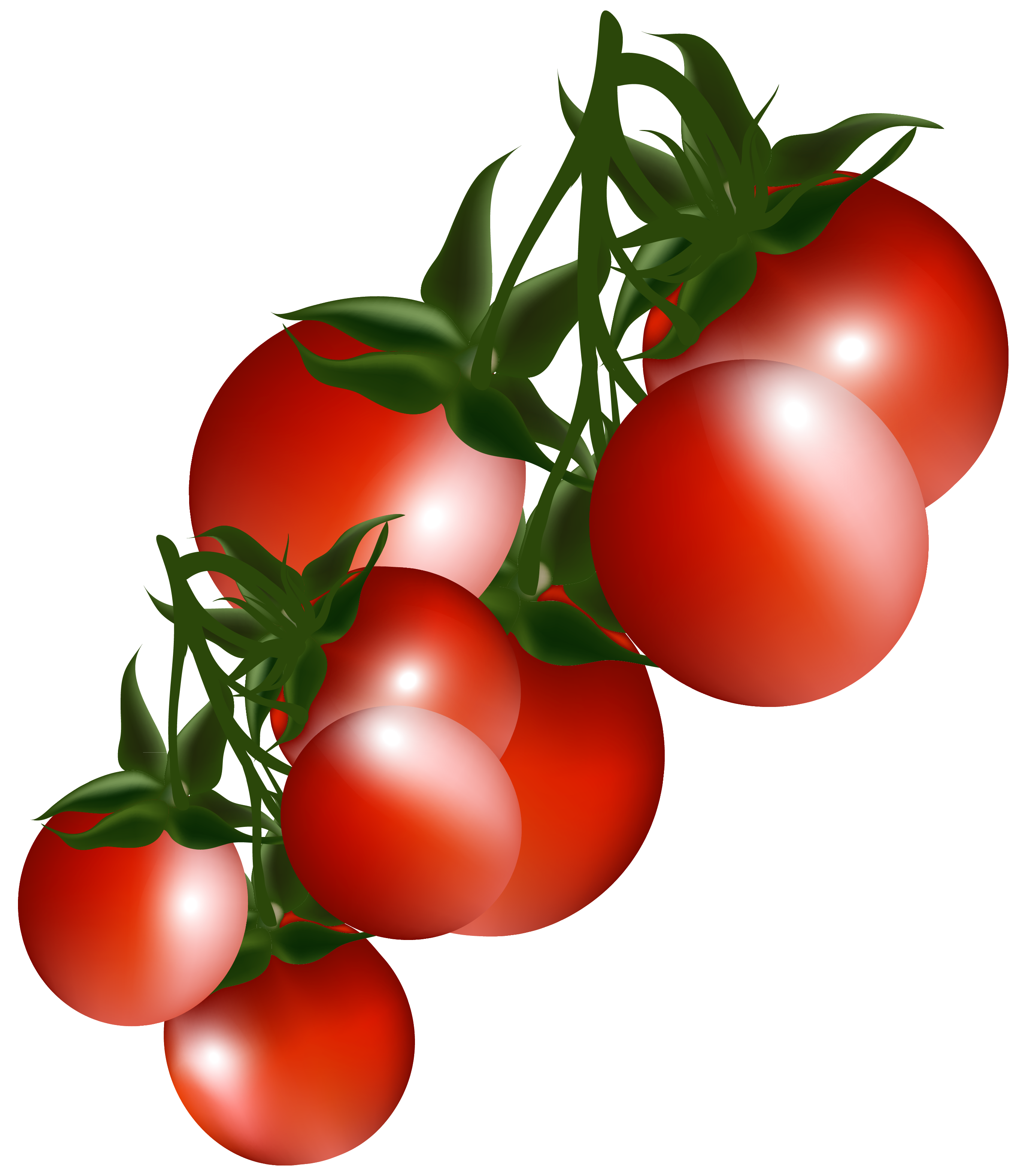 Free clipart tomatoes.
