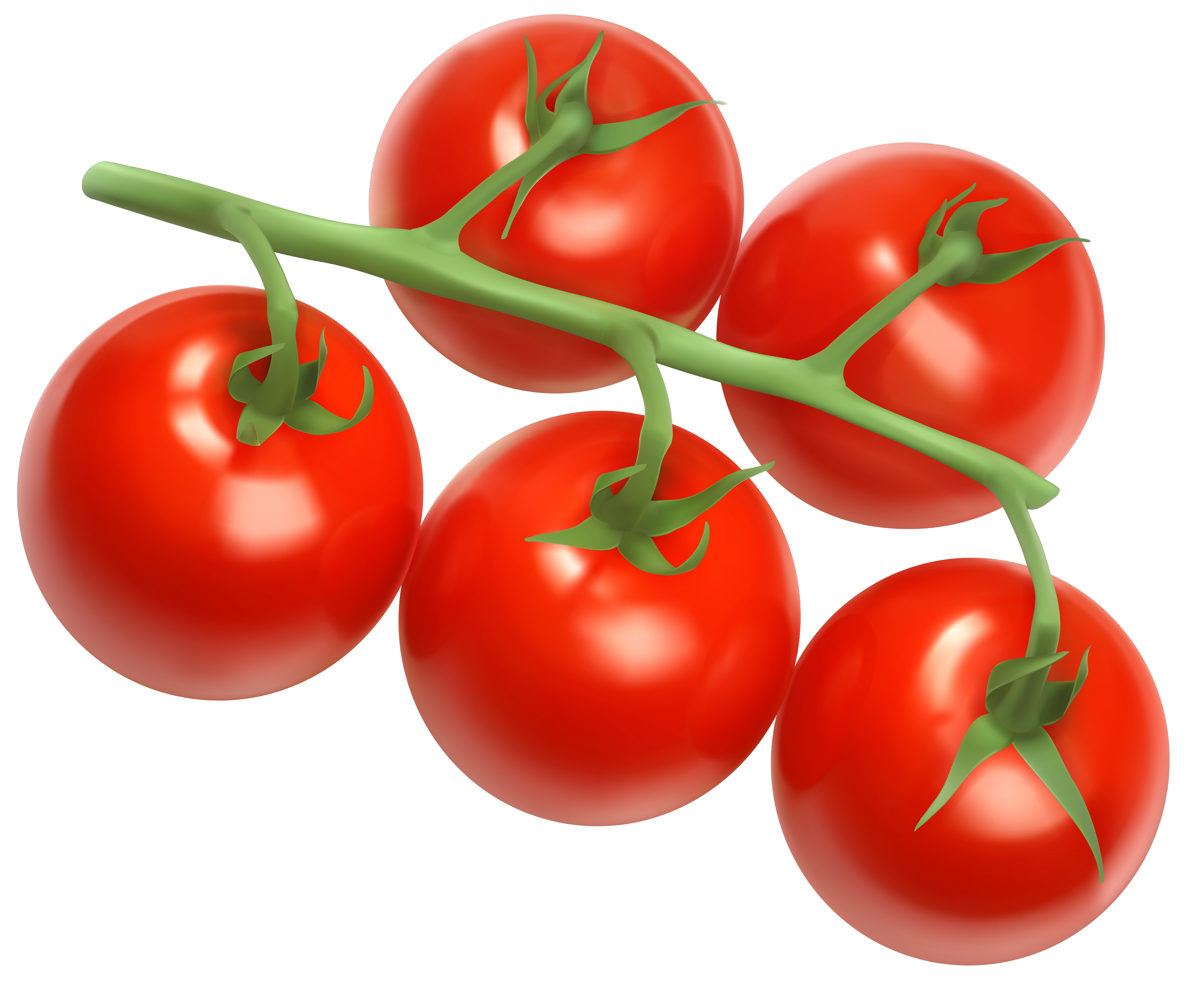 Tomatoes PNG Vector Clipart Image.