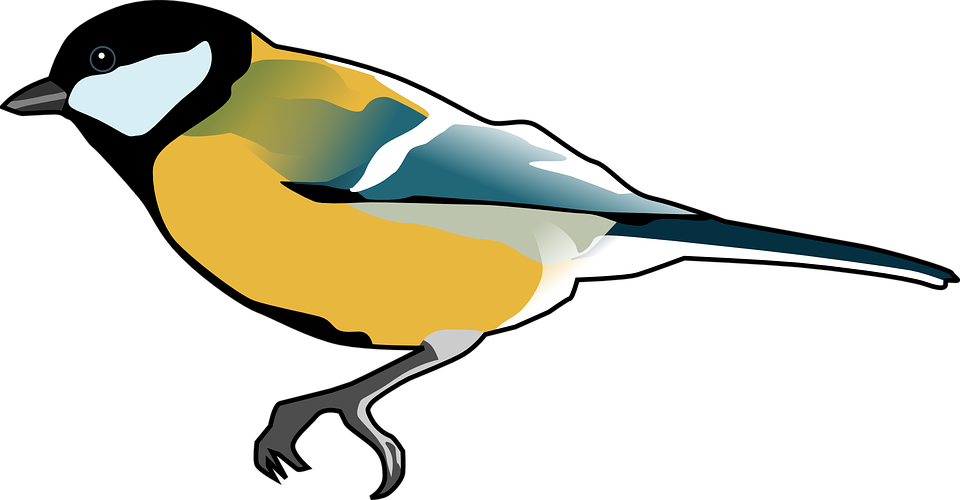 Free vector graphic: Tomtit, Bird, Titmouse, Tit.