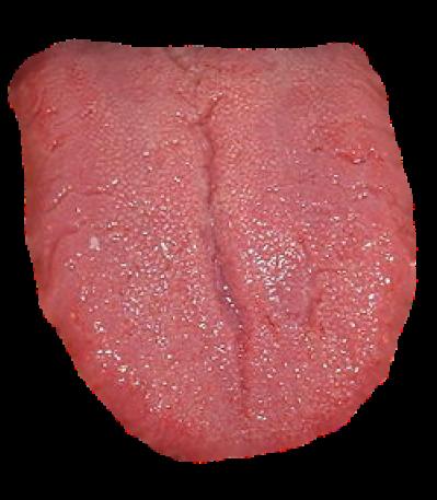 PNG image Tongue PNG.