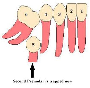 Dr. Vora's Dental Care.