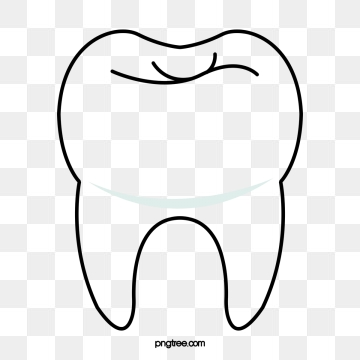 Tooth clipart vector, Tooth vector Transparent FREE for.