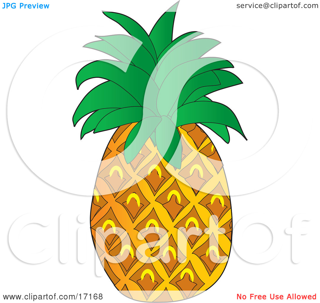 Perfect Pineapple Fruit With Leaves on the Top Clipart.
