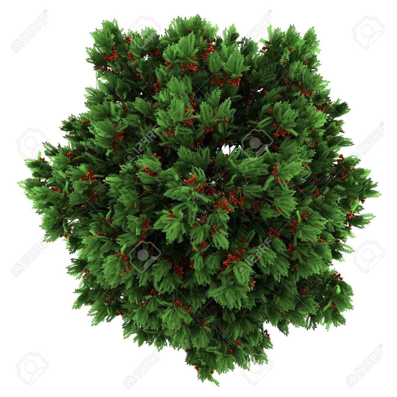 Tree PNG Top View Transparent Tree Top View.PNG Images.