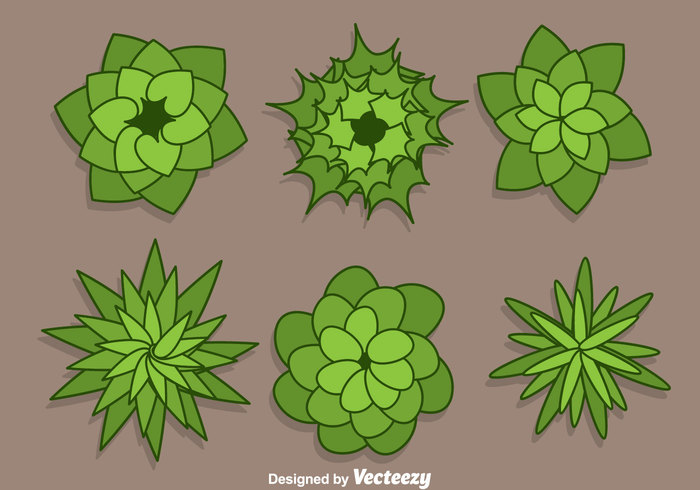 Plant Top View Vectors.