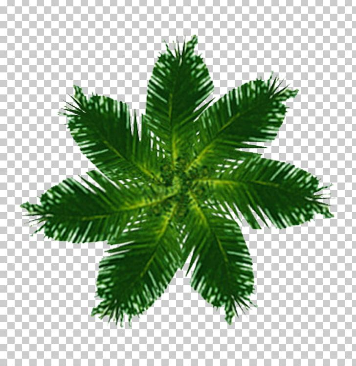 Tree Top View PNG, Clipart, Arecales, Art, Creative Market.