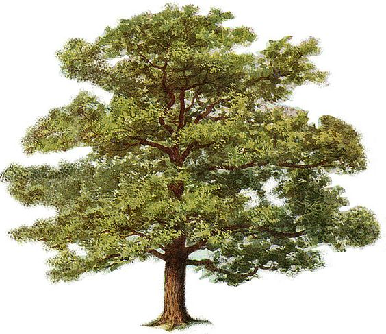 images of trees.