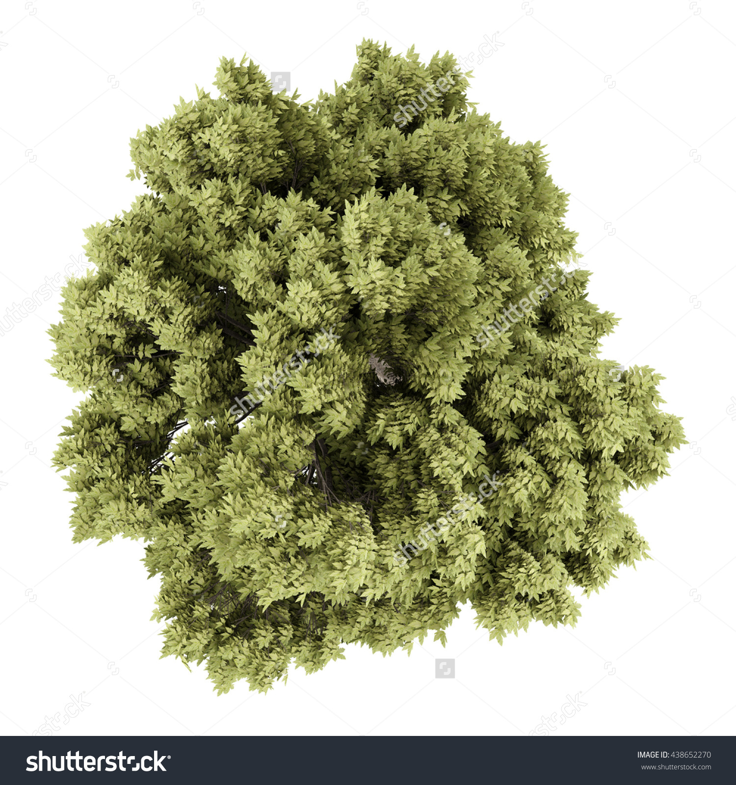 Top View Sycamore Maple Tree Isolated Stock Illustration 438652270.