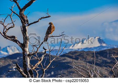 Stock Images of Pray bird in Parque Nacional Torres del Paine.
