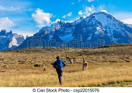Picture of Man vs Guanacos in Parque Nacional Torres del Paine.