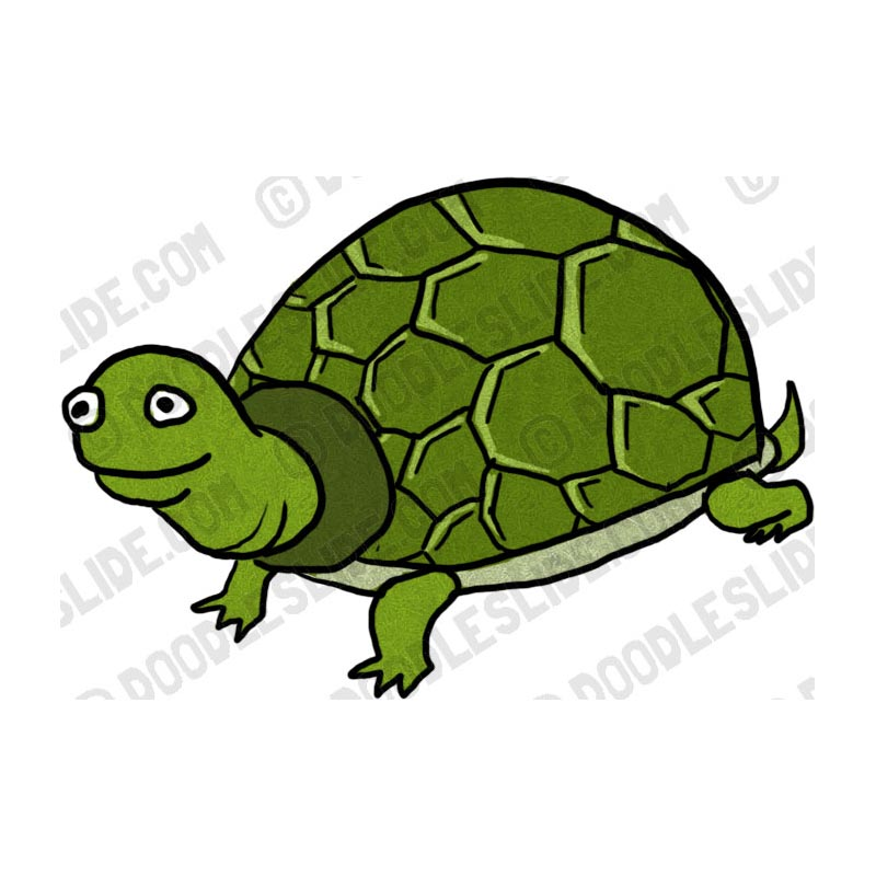 Free Tortoise Clipart Image.