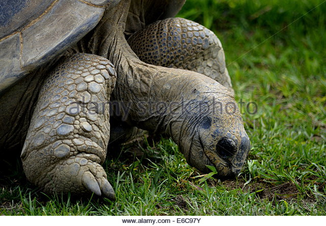 A Tortoise Stock Photos & A Tortoise Stock Images.
