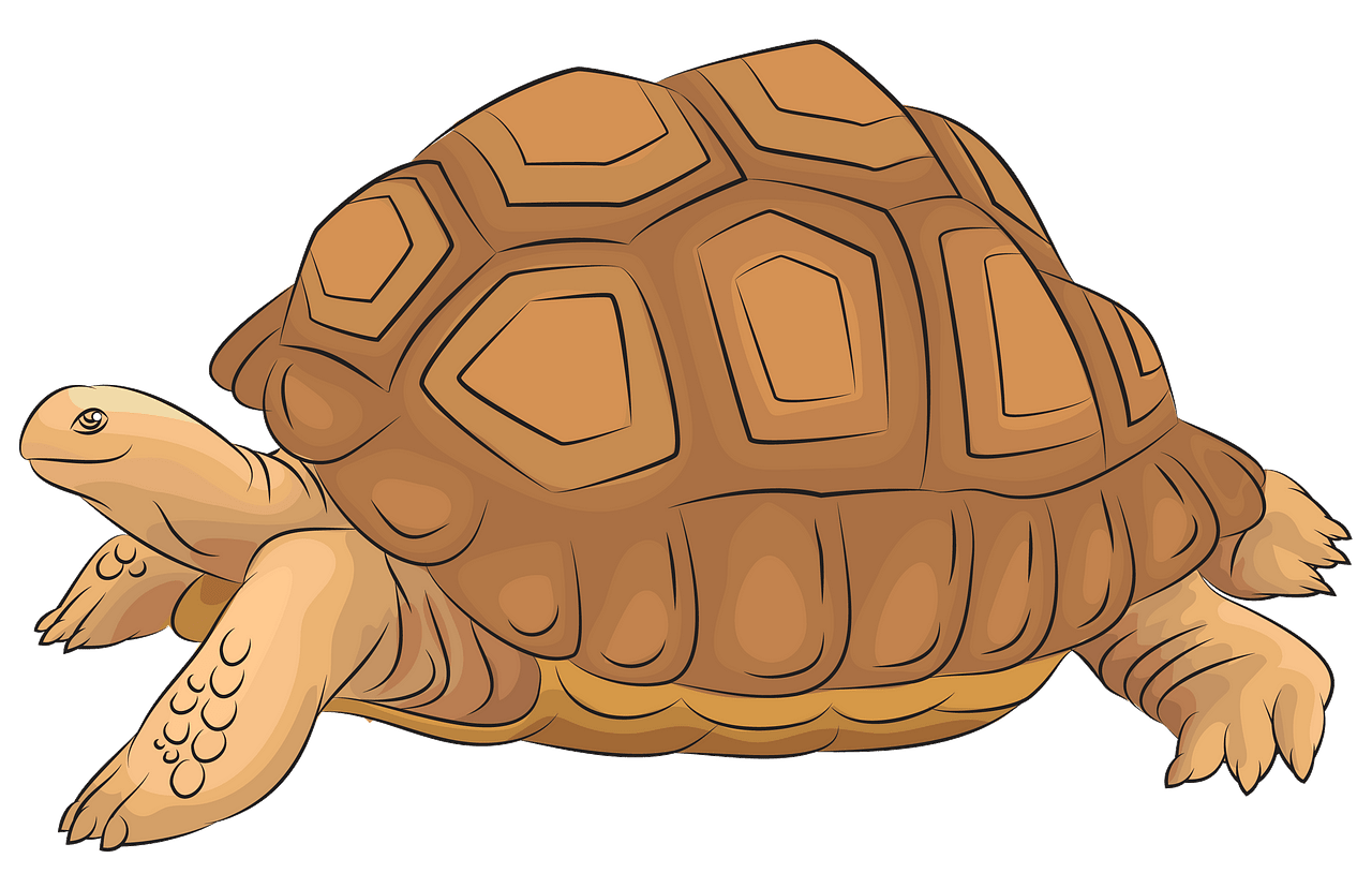 Aldabra Giant Tortoise clipart. Free download..