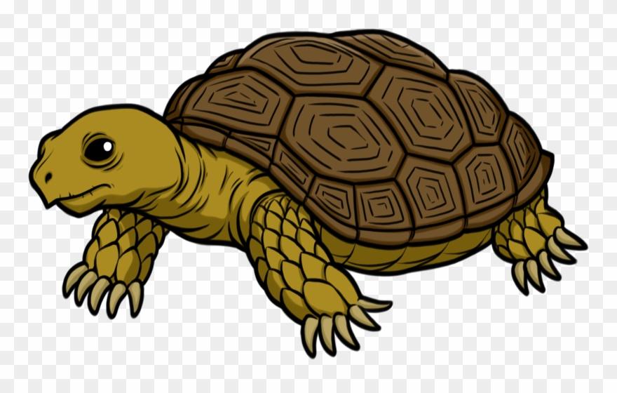 Tortoise.
