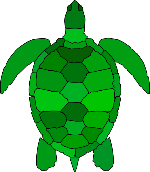 Cartoon Tortoise Shell Images.