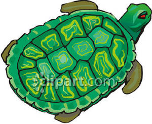 The_Shell_Tortoise_Royalty_Free_Clipart_Picture_090208.