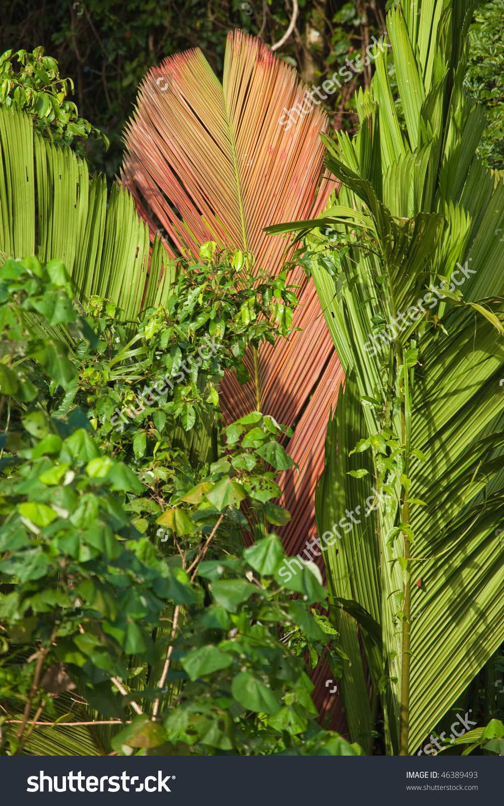 Tropical Foliage Background Of Palm Trees And Vines Of Tortuguero.