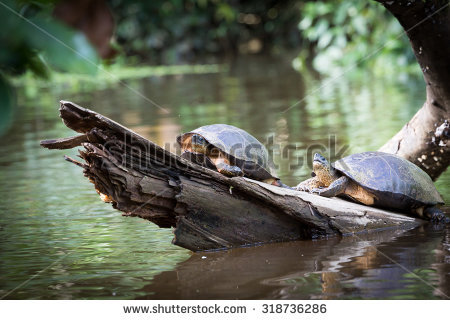 Tortuguero Stock Photos, Royalty.
