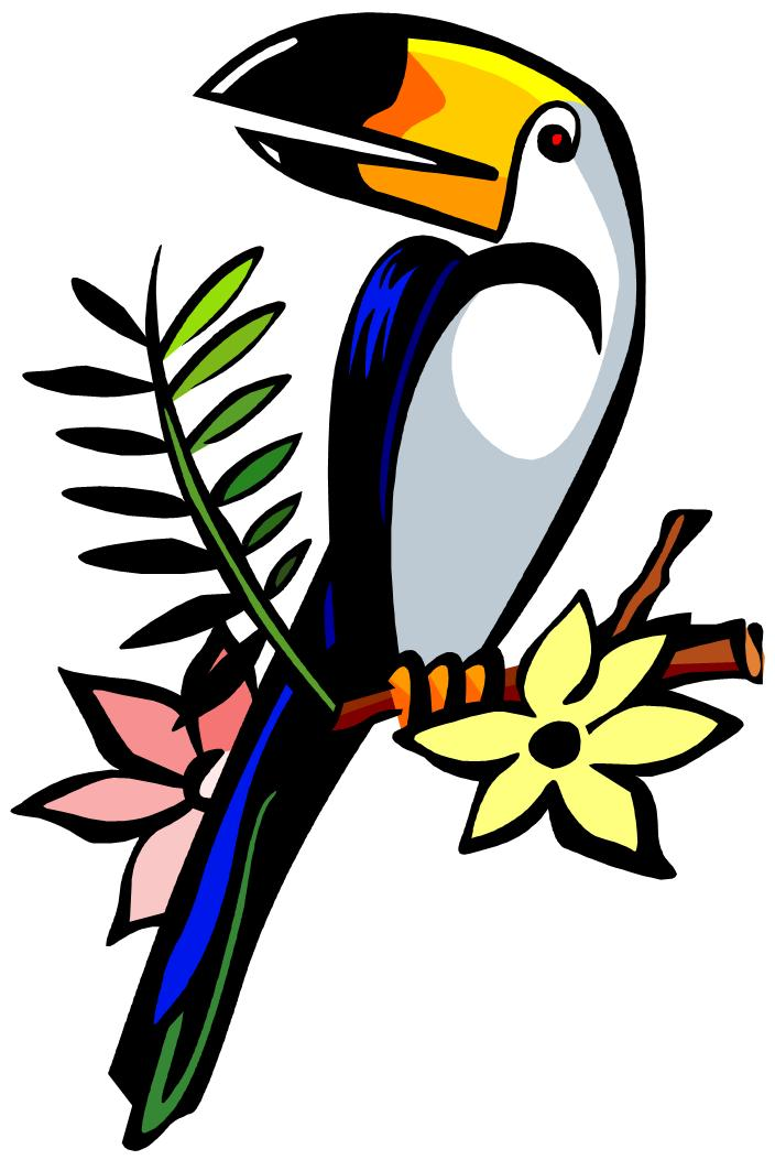 toucan clipart rainforest tucan bird clip toco birds word jungle food clipground clipartmag microsoft cliparts clipartion give comments