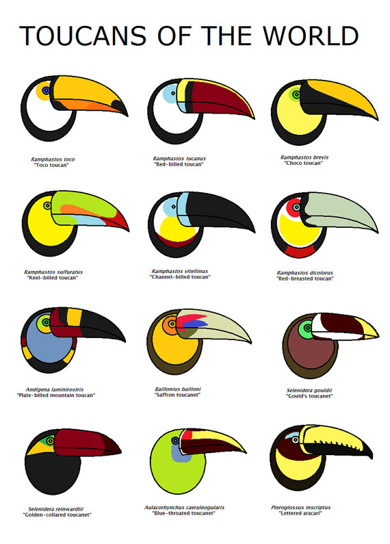 1000+ images about Tucano on Pinterest.
