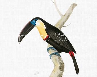 Toucan image.