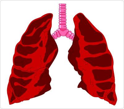 Lungs & Trachea Clip Art.