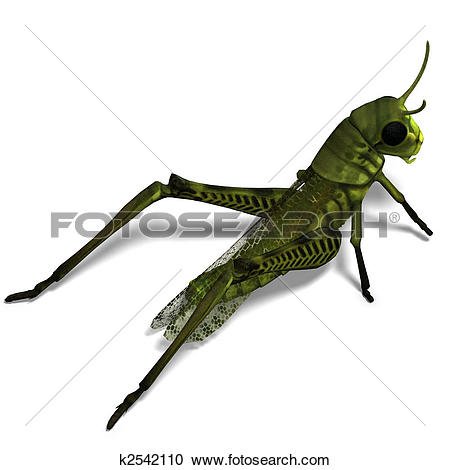Stock Illustrations of green grasshopper k2542110.
