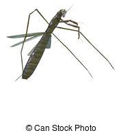 Clipart of praying mantis.