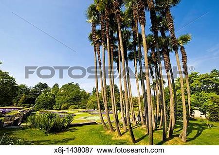 Picture of Trachycarpus fortunei, Villa Taranto, Pallanza, Italy.