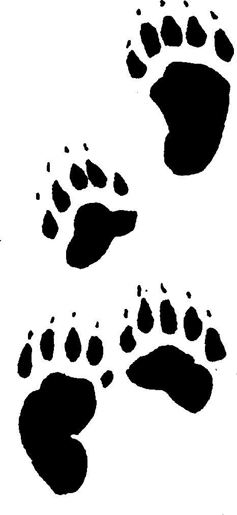 drawings of black bear tracks for under concrete sealer.