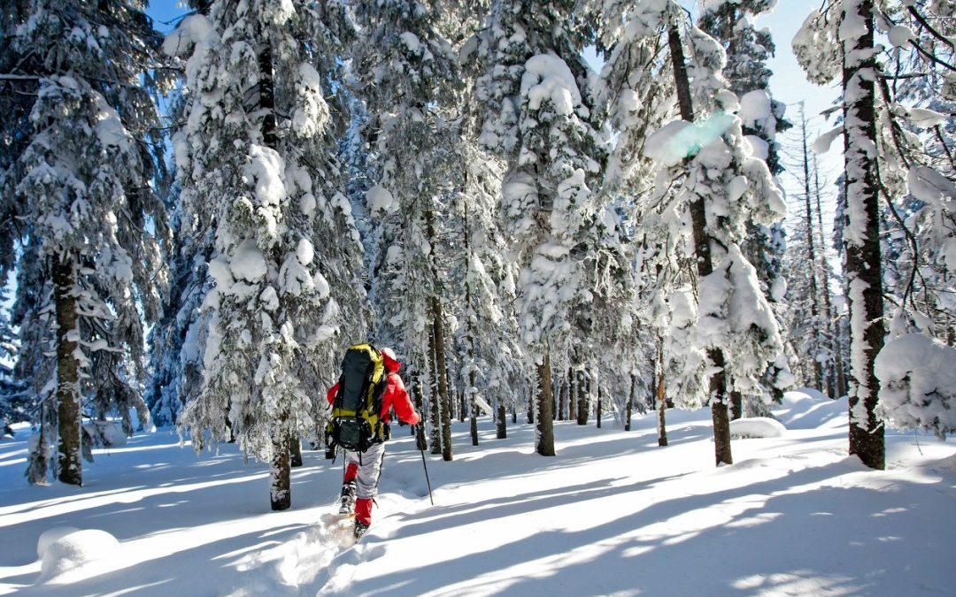 The Best Snowshoe Trails in Salida & Buena Vista, CO.