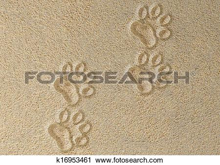 Clipart of Four tracks of cat in the sand k16953461.