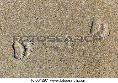 Picture of USA, Alaska, Bear tracks on sand at Lake Clark National.