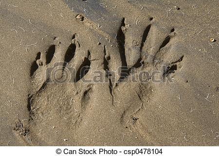 Stock Photo of animal tracks.