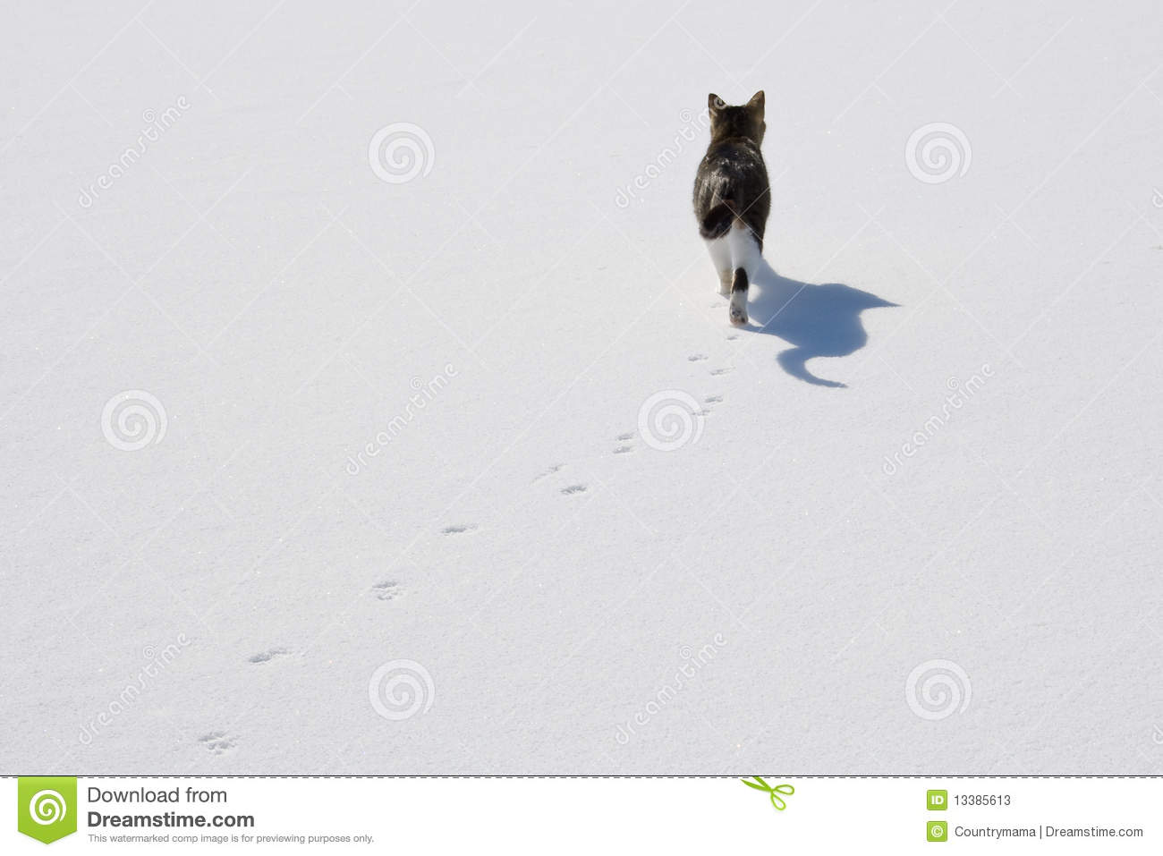 Animal Tracks Snow Stock Photos, Images, & Pictures.