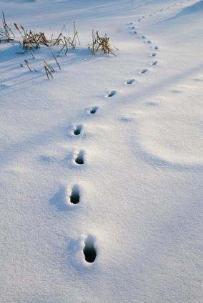 Footprints in Snow Clip Art.