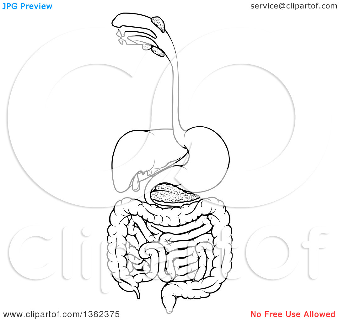 Clipart of a Black and White Medical Diagram of the Human.
