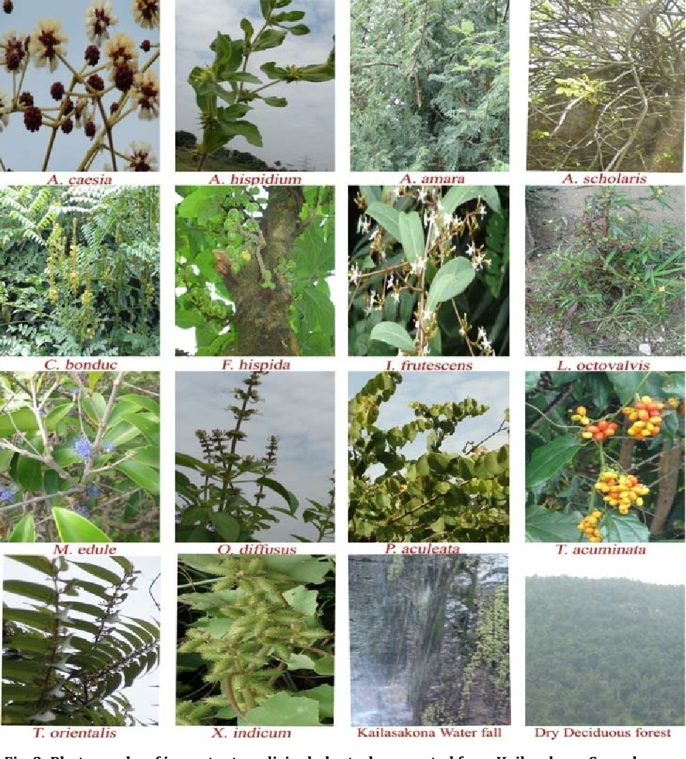 Figure 2 from TRADITIONAL MEDICINAL PLANTS USED BY LOCAL.