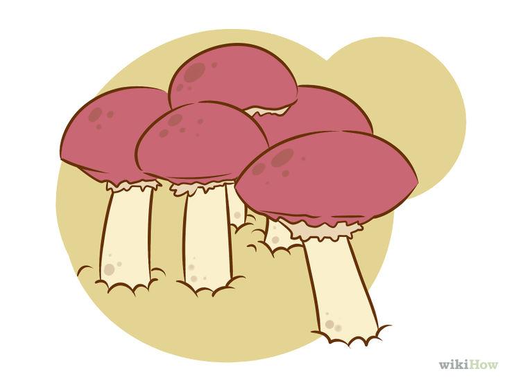Essbare Pilze züchten.