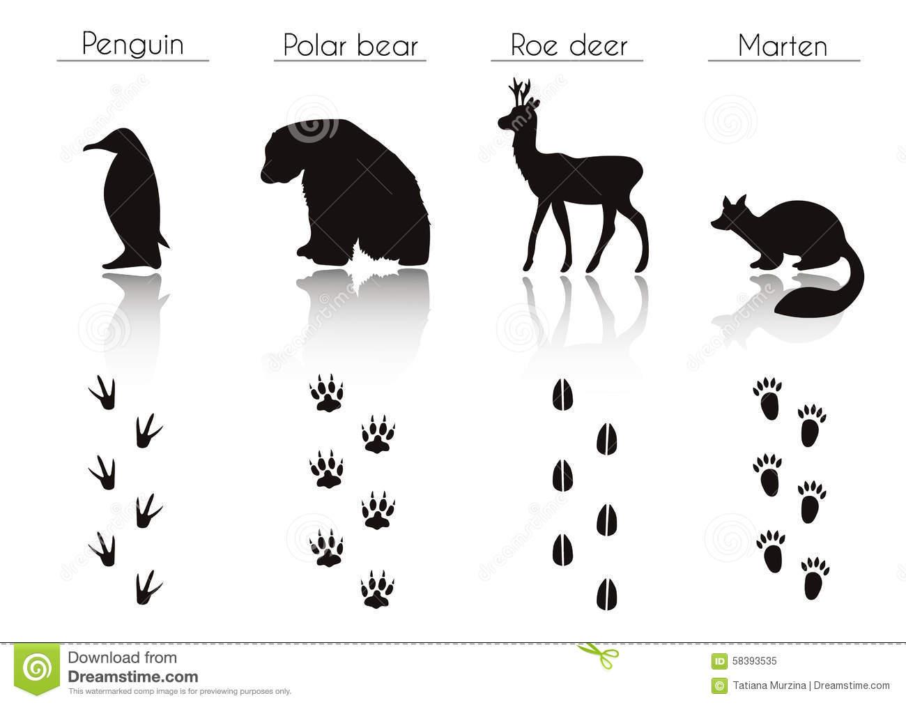 Animal trail clipart.