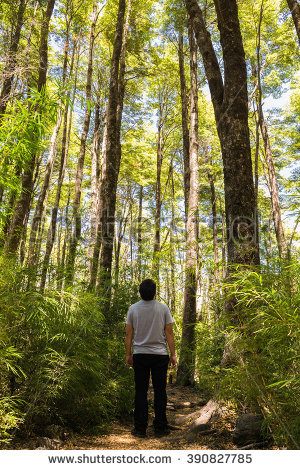 Summer Forest Stock Photos, Royalty.