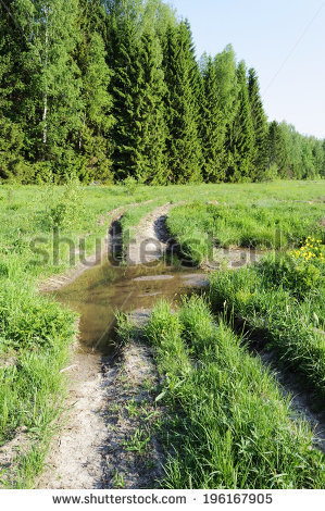 View Coniferous Forest Edge Spring Time Stock Photo 51175243.