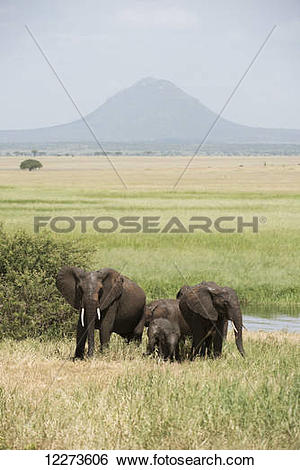 Stock Images of Elephant family group in Silale Swamp, Tarangire.