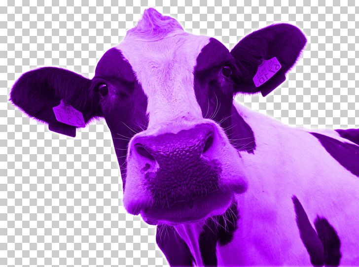 Cattle Purple Cow: Transform Your Business By Being.